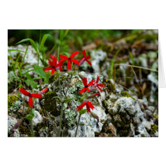 Red Wildflower on Rock Card