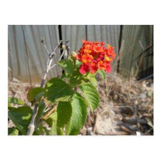 Red Wildflower Postcard