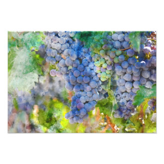 Red Wine Grapes in the Vineyard Photo Print