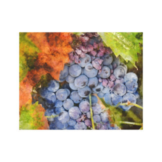 Red Wine Grapes on the Vine Canvas Print