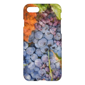 Red Wine Grapes on the Vine iPhone 7 Case