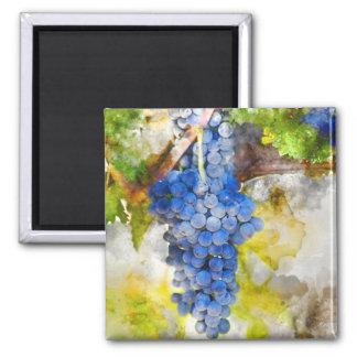 Red Wine Grapes on Vine Magnet
