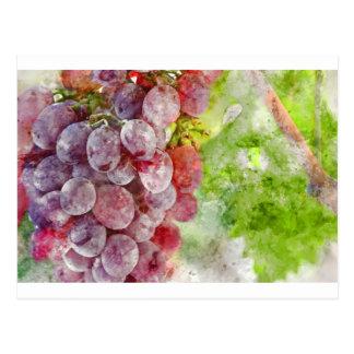 Red Wine Grapes on Vine Postcard