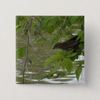 red winged black bird Fishing from a tree branch 2 Inch Square Button