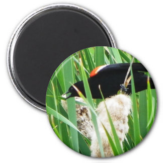 Red Winged Black Bird Magnet
