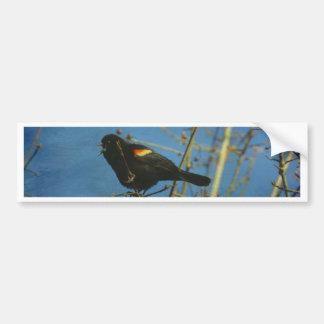 Red-Winged Black Bird singing Bumper Sticker