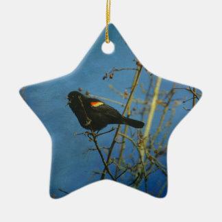 Red-Winged Black Bird singing Ceramic Star Ornament