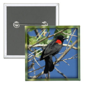 Red-winged Blackbird 2 Inch Square Button
