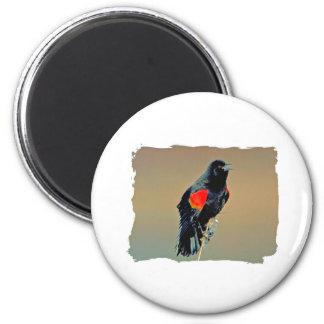 Red-winged Blackbird Art 2 Inch Round Magnet