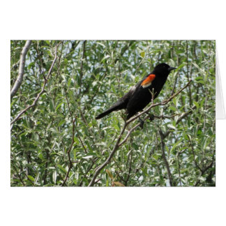 Red-winged Blackbird, Cheer Card