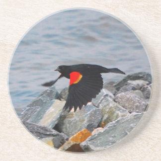 Red Winged Blackbird - coaster