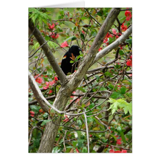 Red-winged Blackbird & Floral Card