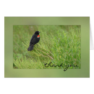Red Winged Blackbird Greeting Card