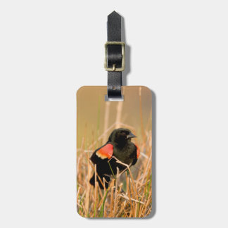 Red-winged Blackbird male singing Luggage Tag