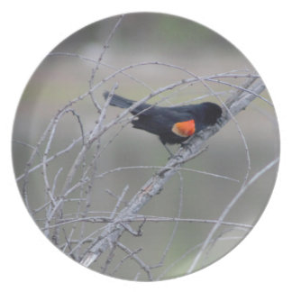 Red-winged Blackbird on a Branch Plates