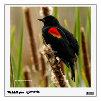 Red-Winged Blackbird on the Bulrush Wall Sticker