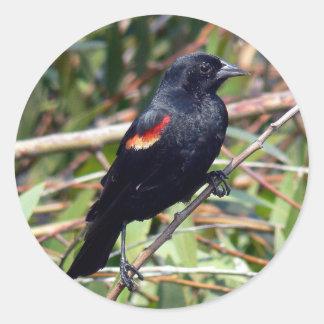 Red-winged Blackbird Round Sticker