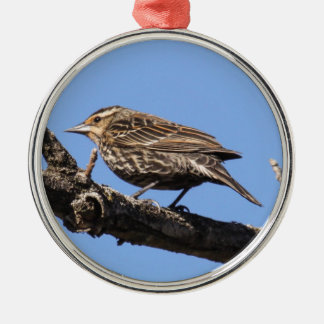 Red-winged Blackbird Silver-Colored Round Ornament