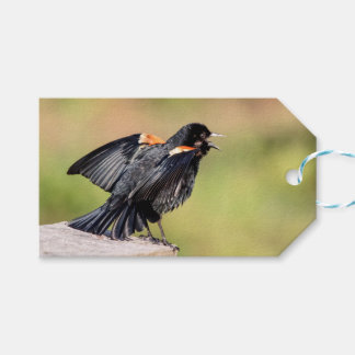 Red Winged Blackbird Singing Pack Of Gift Tags