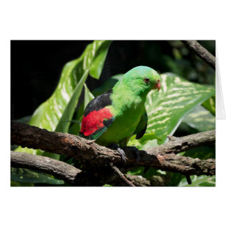 Red-winged Parrot on Tree Limb Card