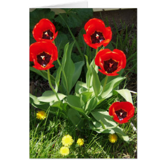 Red With Black Tulips, Sunshine Day Card