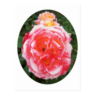 Red with White Edged Rose in Oval Shape Postcard