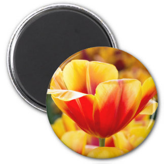 Red with yellow tulip in flowers field 2 inch round magnet