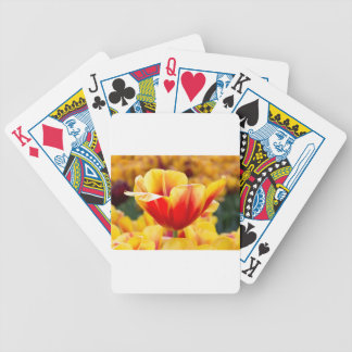 Red with yellow tulip in flowers field bicycle playing cards