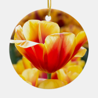 Red with yellow tulip in flowers field ceramic ornament