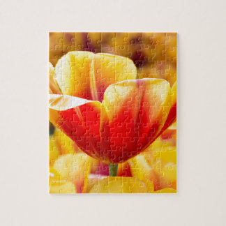 Red with yellow tulip in flowers field jigsaw puzzle