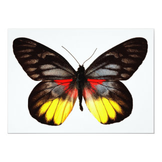 Red Yellow and Black Butterfly Invitation