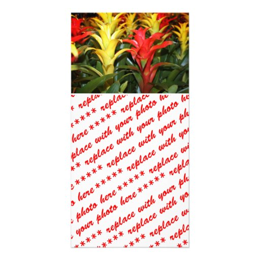 Red & Yellow Tropical Plants Photo Card Template