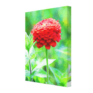 Red Zinnia Flower Canvas Print