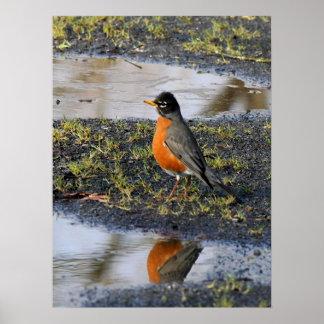 redbellybird poster