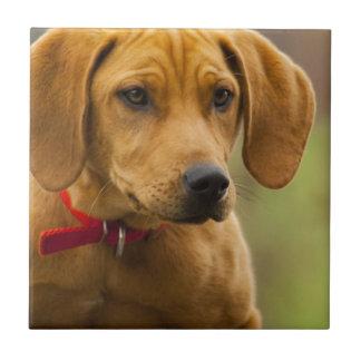 Redbone Coon Hound Dog Puppy Ceramic Tiles