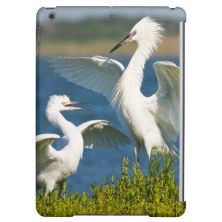Reddish Egret (Egretta Rufescens) Adult Feeding iPad Air Case