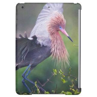Reddish Egret (Egretta Rufescens) Adult iPad Air Cases