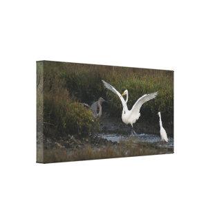 Reddish Egret II Wrapped Canvas