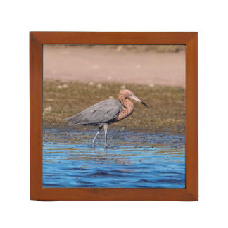 Reddish Egret on North Beach Desk Organizer