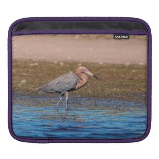 Reddish Egret on North Beach iPad Sleeve