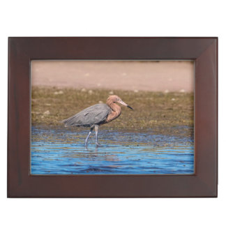 Reddish Egret on North Beach Keepsake Box