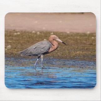 Reddish Egret on North Beach Mouse Pad