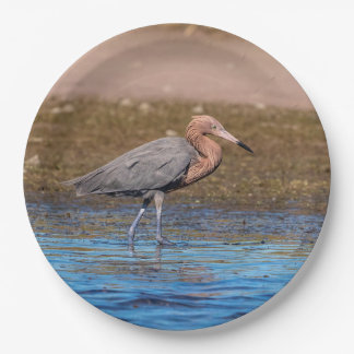 Reddish Egret on North Beach Paper Plate