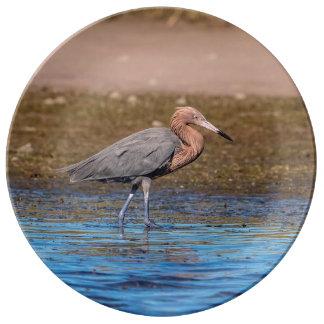 Reddish Egret on North Beach Plate