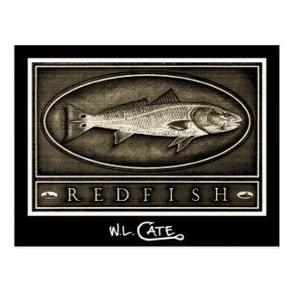 Redfish Vintage Black & White Postcards