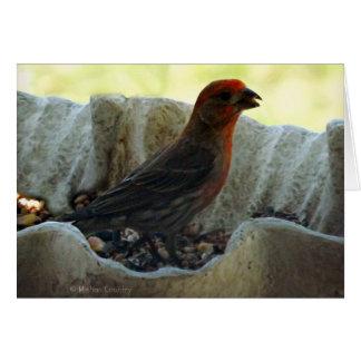 Redhead Bird Card