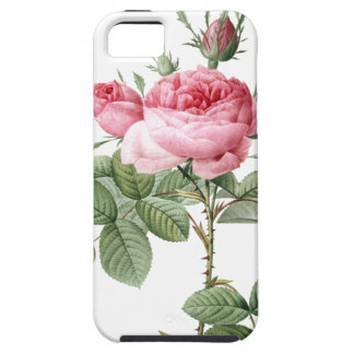 Redoute Les Rose #2 iPhone 5 Case