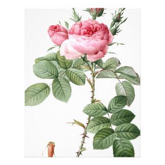 Redoute Les Rose #2 Letterhead