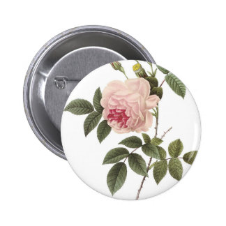 Redoute Rose 2 2 Inch Round Button