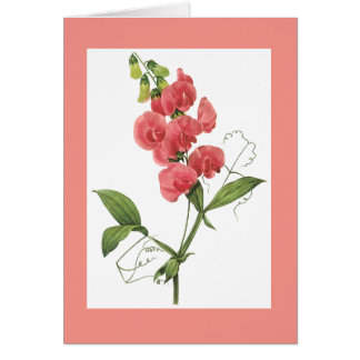 Redoute Sweet Pea Notecard Greeting Card